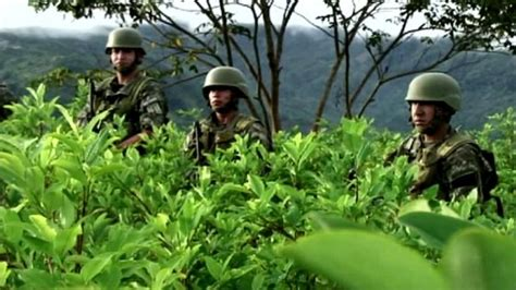 perus challenge peru s challenge to tackle cocaine trade news