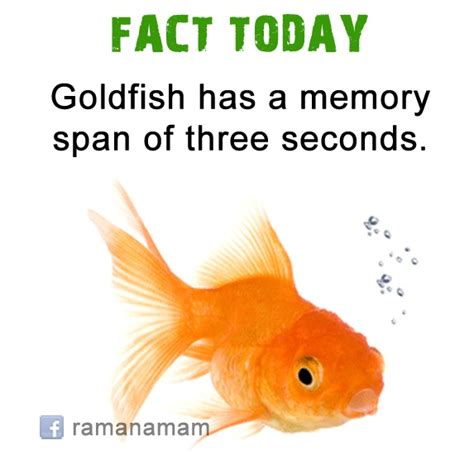 memory span pin by ramanamam website on ramanamam facts