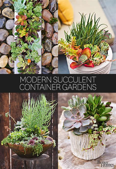 fresh amazing home vegetable garden australia 10902 modern succulent container gardens