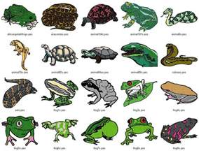 the gallery for gt reptiles pictures with names