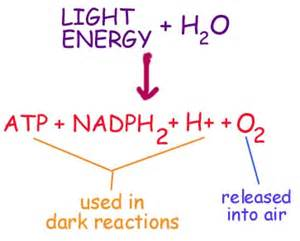 photosynthesis chemistry