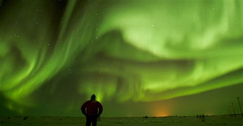northern lights packages alaska polar bear tours trips churchill polar bears