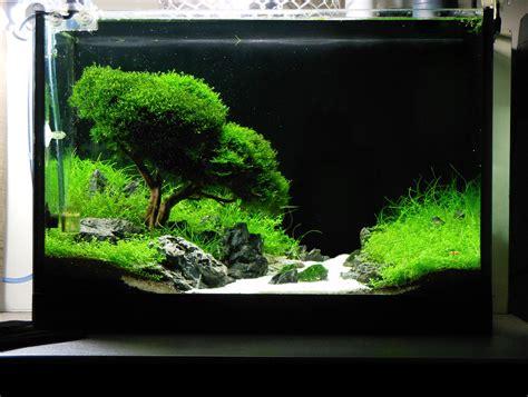arredamento acquario dolce quot evergreen quot l alberello in acquario secondo sago1985