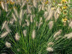 Pflanzen Für Kiesgärten by Pflegeleichten Kiesgarten Anlegen So Wird S Gemacht