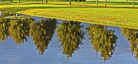 Mirroring Trees mirroring trees photograph by heiko koehrer wagner