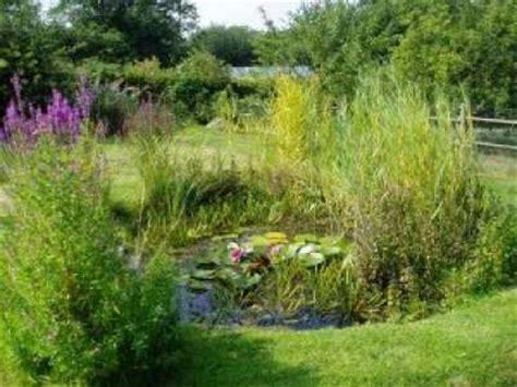 natural backyard pond woodcote conservation group reports