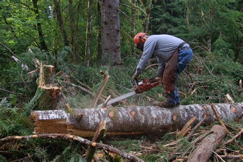 service certification requirements forest service sets safety requirements on chopsaws chains saws