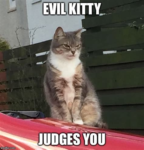 Evil Cat Meme - evil kitty judges you imgflip