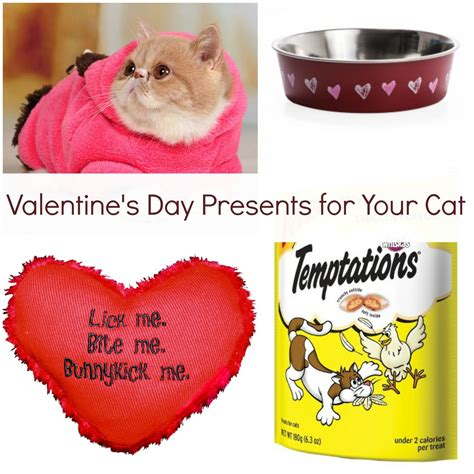day present s day presents for your cat heartland soul