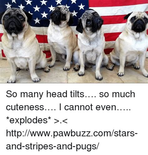 i my pug so much pugs memes of 2016 on sizzle cars