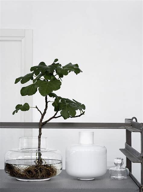 vasi trasparenti ikea vasi trasparenti in vetro eleganza minimalista around