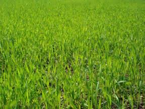 datei grass field in kstovsky district jpg