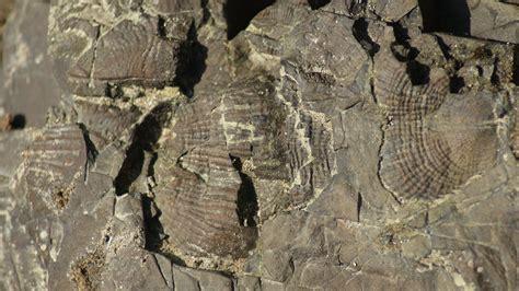 Fosil Kerang Mutiara geopark merangin kemegahan warisan dunia halo merangin
