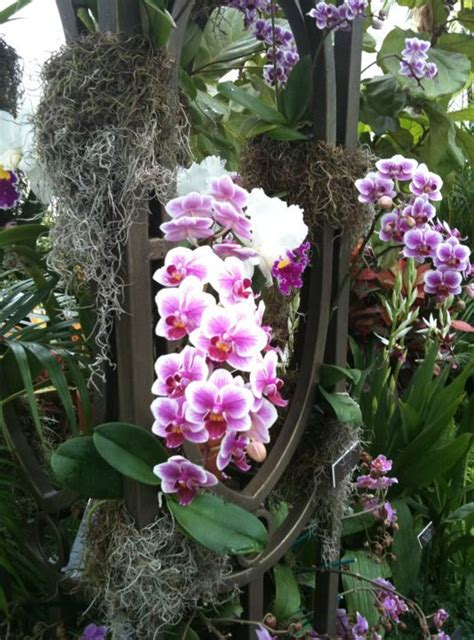 new york orchid show new york botanical garden orchid show discount new york