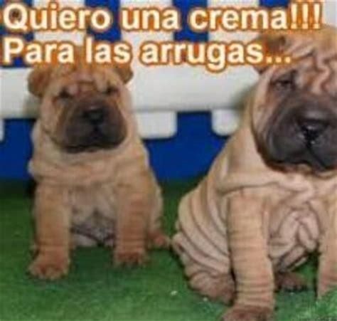 imágenes de animales chistosas para whatsapp fotos graciosas de animales con frases chistosas para