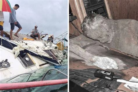 boat dog and ghost dog ghost yacht found drifting in sea with captain s mummified