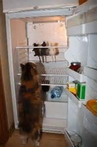 problemi di alimentazione problemi di alimentazione nei gatti tutto ze