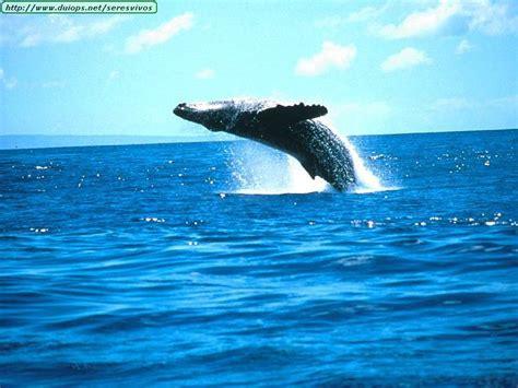 imagenes sorprendentemente bellas espectaculares im 225 genes de ballenas y gigantes marinos