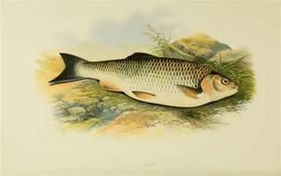 british freshwater fish thegentlemanangler com