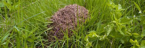 disinfestazione formiche giardino disinfestazioni il giardino re
