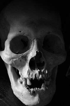 Skull | Skull reference, Human skull, Skull