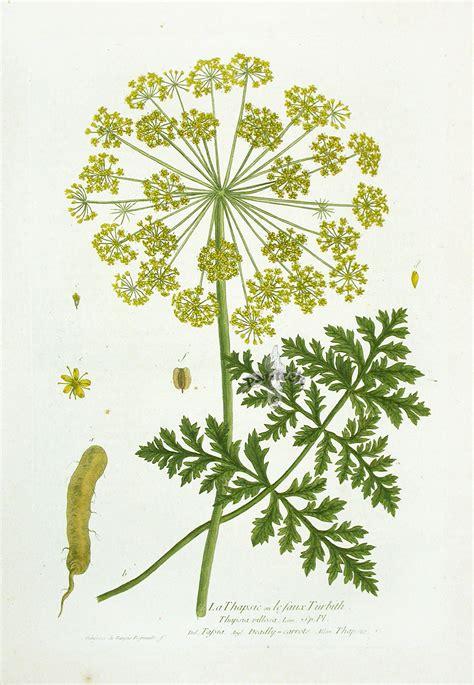 printable botanical images 8 best images of printable botanical prints free