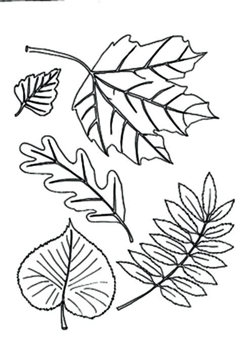 printable maple leaves coloring pages leaf printable coloring pages free kids fall activity