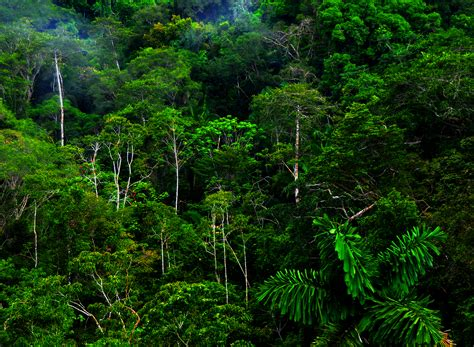 amazon jungle tropical rainforest tropical rainforest tropical rainforest glogster edu