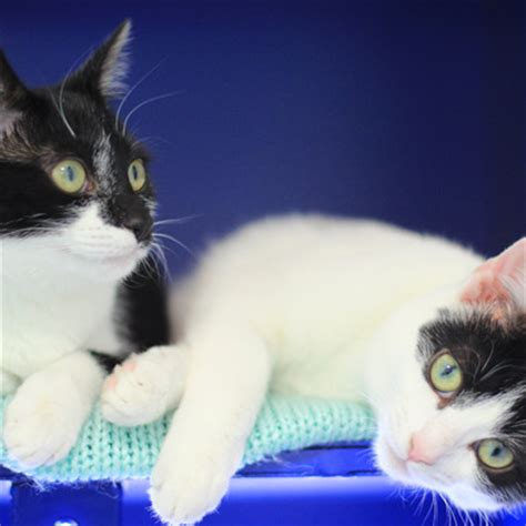 how to rehome a cat rehoming gallery battersea dogs cats home