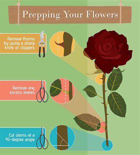 Vase Frog Infographic Flower Arranging For Beginners Mytoba Ca News