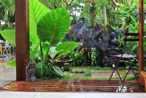 tropical plants for backyard create your own tropical garden