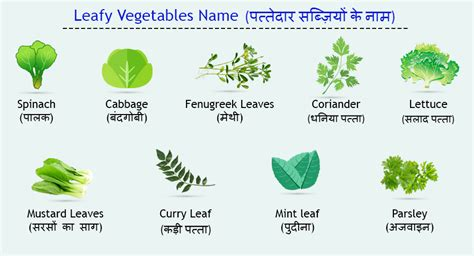 6 vegetables name in vegetable names in edurite