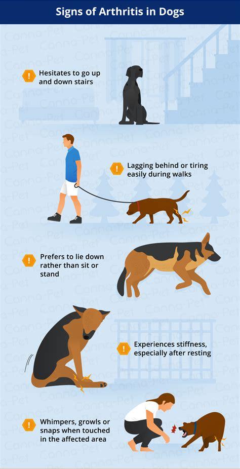 signs of arthritis in dogs arthritis symptoms remedies canna pet 174