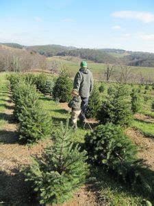 west virginia christmas tree farmscharleston wv eastern panhandle of west virginia tree farms choose and cut trees tree