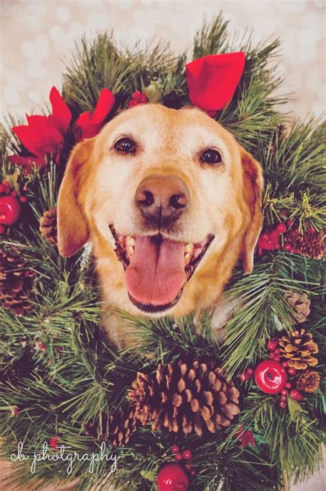 merry puppy 17 best images about card ideas on holidays and labradors