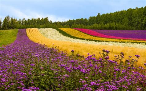 different color trees different color flowers field trees japan wallpaper