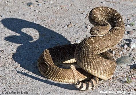 film ular derik top 10 longest snakes in the world go4pix funniest