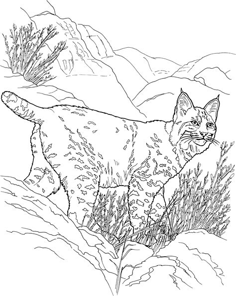 coloring pictures of big cats baby lynx free colouring pages