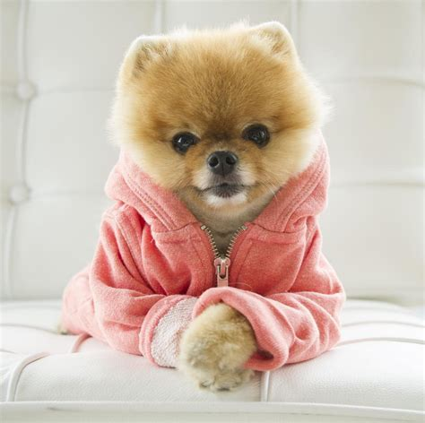 what of is jiffpom jiff pom jiffpom the shorty awards just pictures of jiffpom