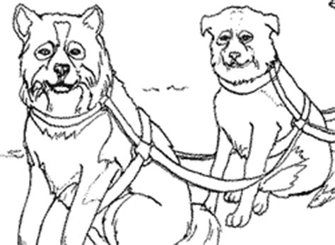 iditarod coloring pages sled dog coloring pages to print coloring pages