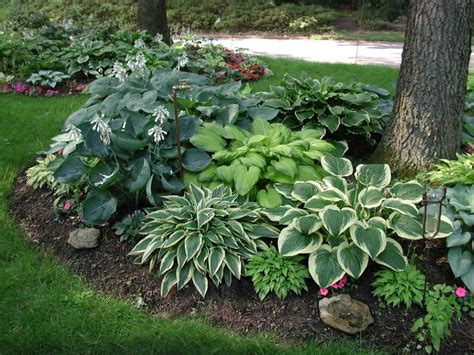 Garden Ideas Around Trees Shade Garden Around Tree Backyard Gardens Landscaping And Yards