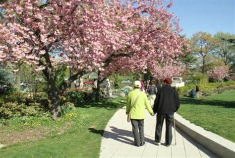 Flushing Botanical Garden Cherry Blossoms Picture Of Botanical Garden Flushing Tripadvisor