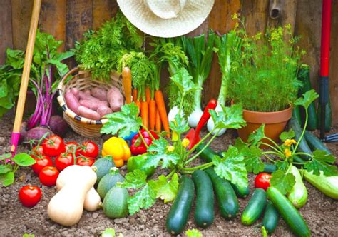 13 Veggies That Grow Insanely Fast Gardening Steps How To Do A Vegetable Garden
