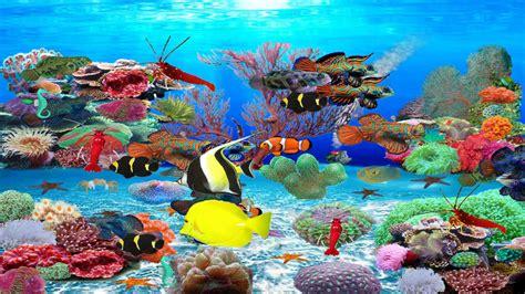 desktop background fond d 233 cran gratuit aquarium qui bouge aquarium vivant pour fond dcran aquarium vivant pour fond