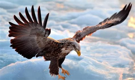 Fly As An Eagle flying eagle point of view freedom alexsysmusic