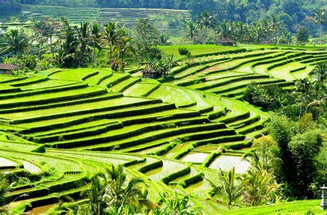 Bali ST   Typologies   Xplorea