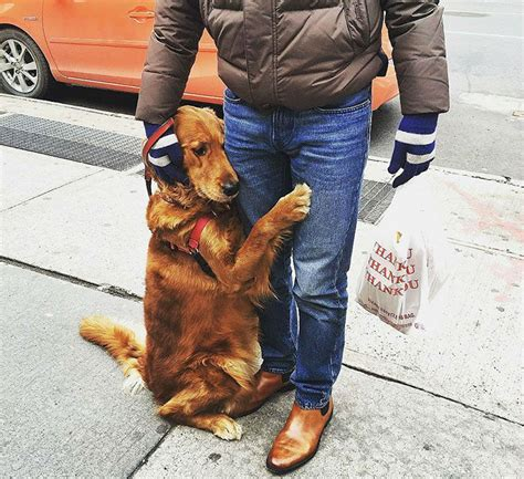louboutina golden retriever meet louboutina a golden retriever who hugging random