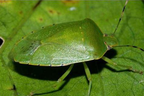 sognare insetti volanti insetti piccoli neri amazing sognare insetti significato
