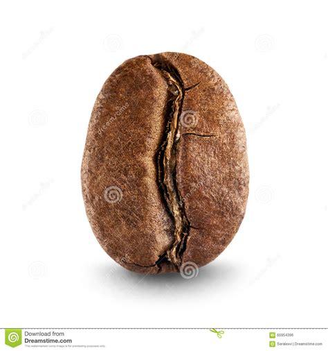 Coffee Di Coffee Bean coffee bean stock photo image of food single white