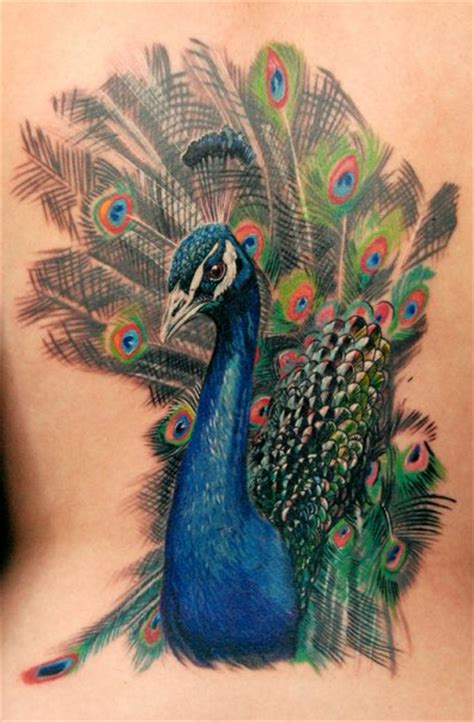 peacock tattoo designs for men of the day quot peacocking quot a stunning peacock